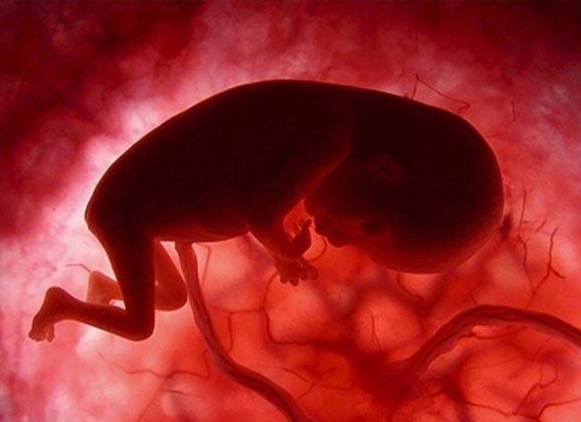 bebe embarazo doce semanas gestacion