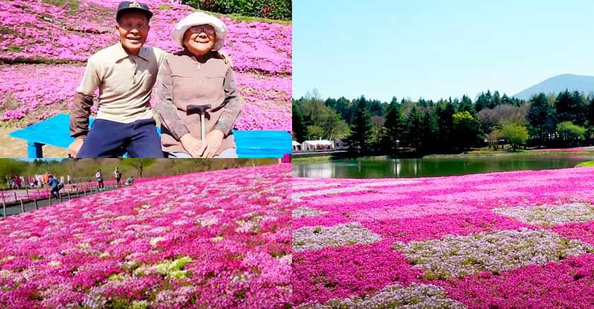 crea jardin oceano de rosas para su esposa ciega