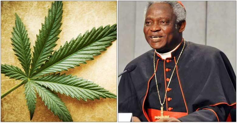 cardenal peter turkson marihuana mayor estudio