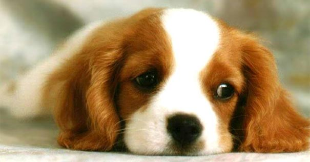 cuando dios habla traves animales perros