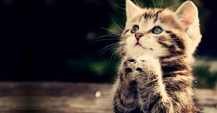 gatito-rezando-cuando-Dios-habla-a-traves-de-los-animales.jpg
