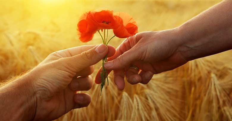 regalando una flor anaranjada en el campo obsequio de amor