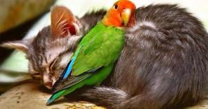 loro trepando un gato dormido amigos no enemigos